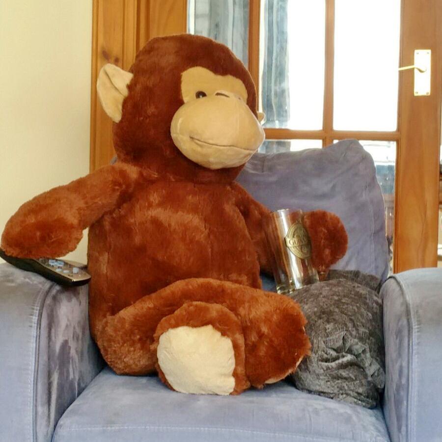 Name the Monkey
